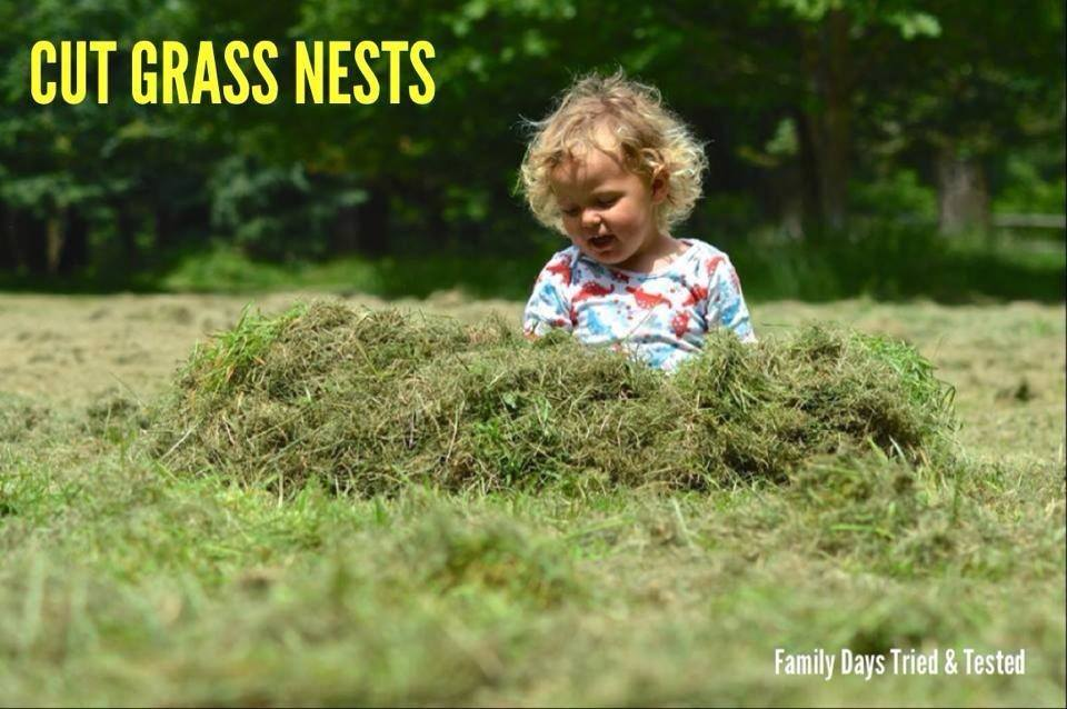Easter & Spring Ideas - cut grass nests