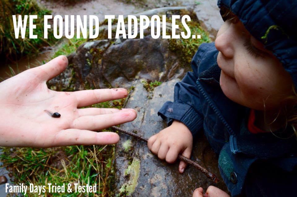 Easter & Spring Ideas - tadpoles