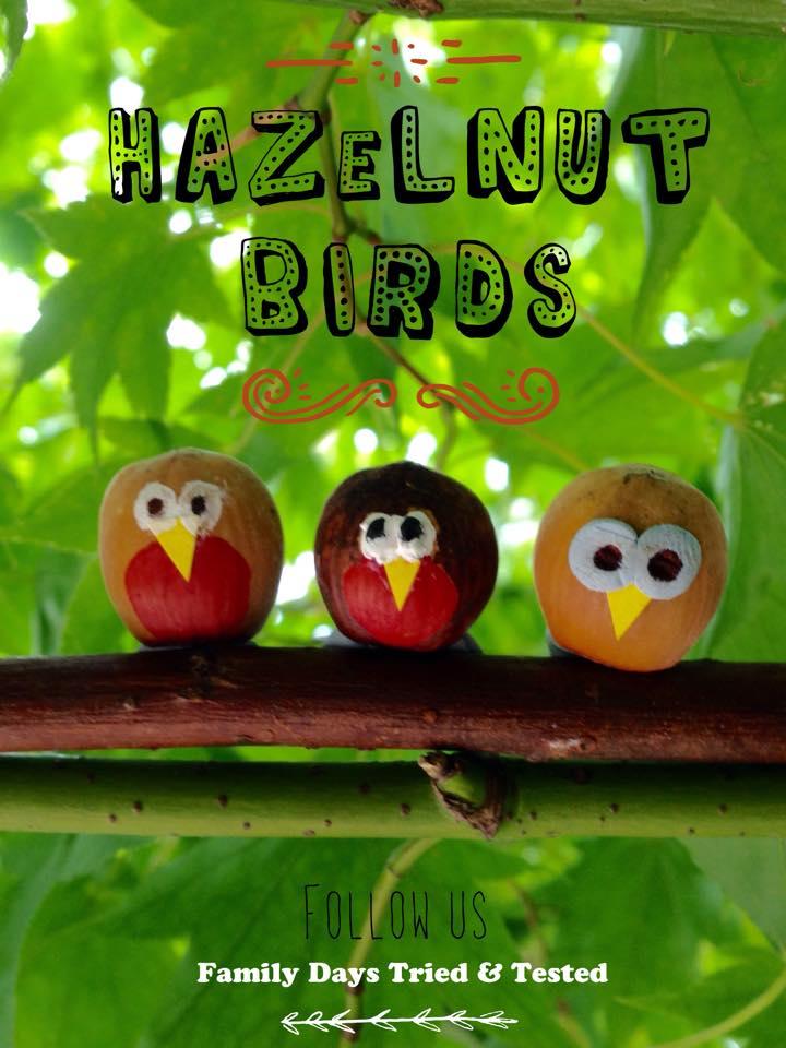hazelnut birds