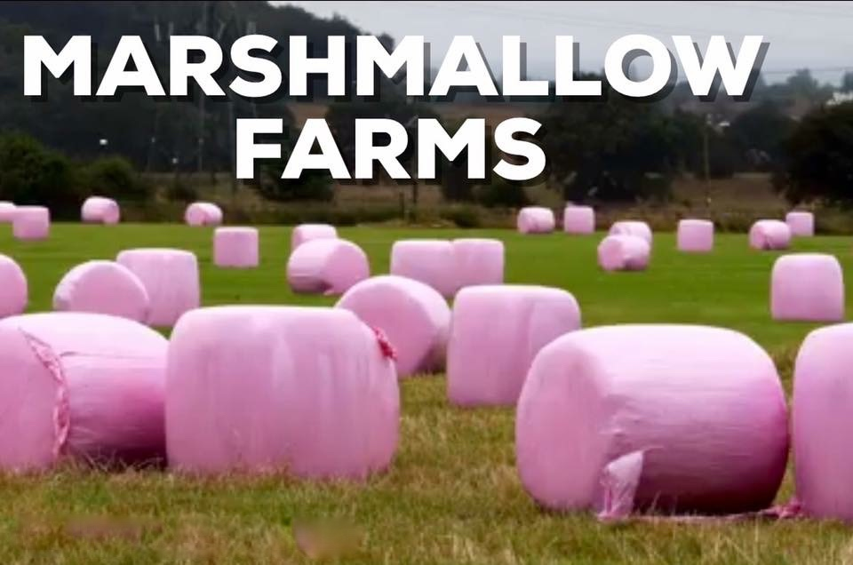 Marshmallow Farms