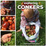 Conker, Hazelnut & Acorn Ideas