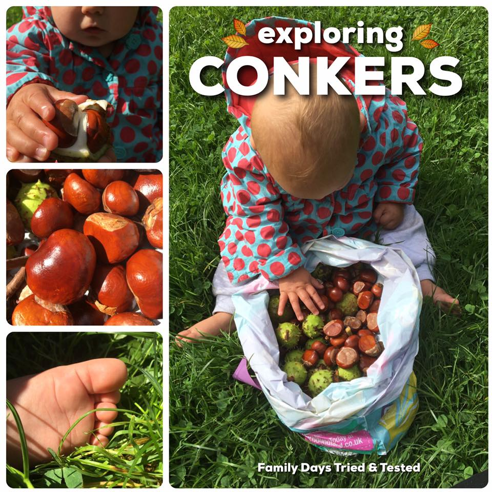 exploring conkers