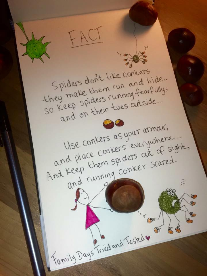 spiders don't like conkers