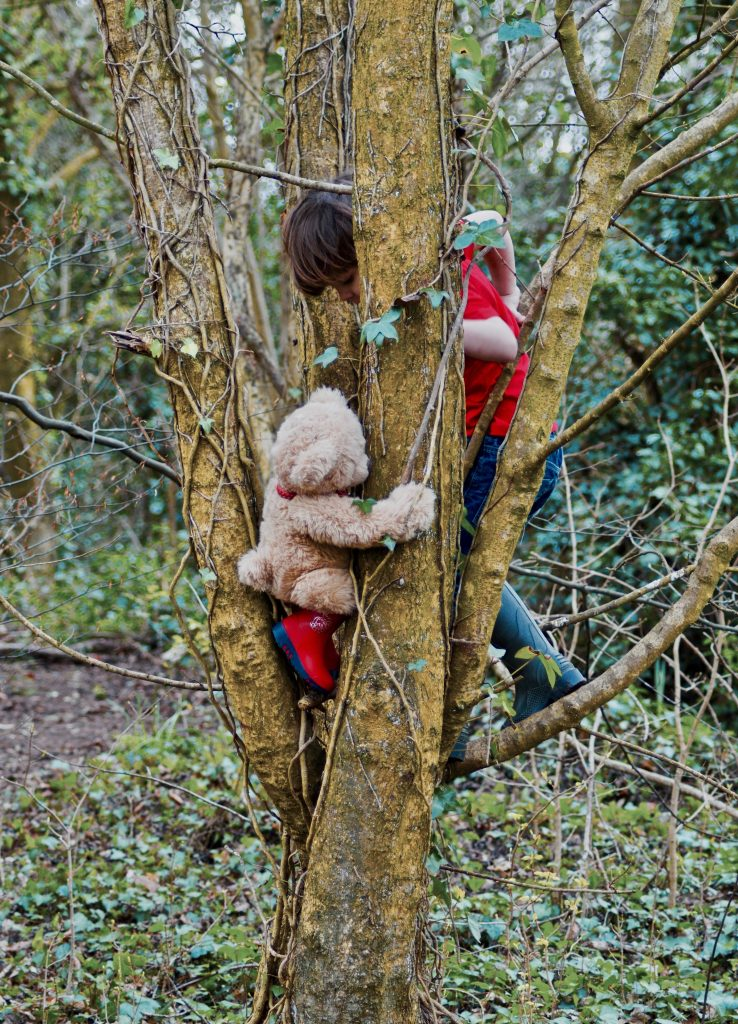 Honey Bear's Day In The Woods