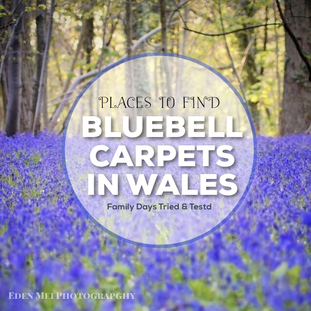 Chepstow archives family days tried and tested bluebell carpets in wales negle Choice Image