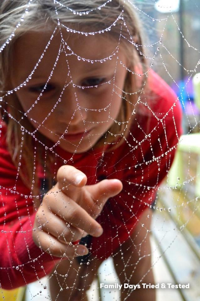 Appreciating The School Run - spider web