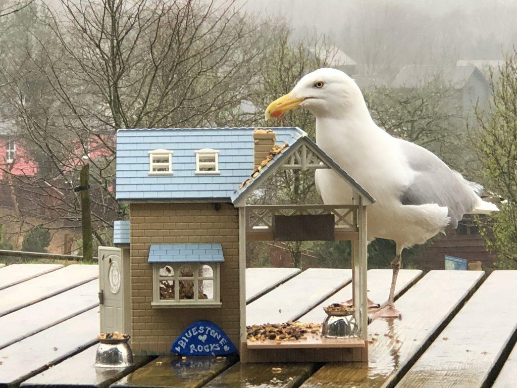Family fun things to do at Bluestone - bird watching