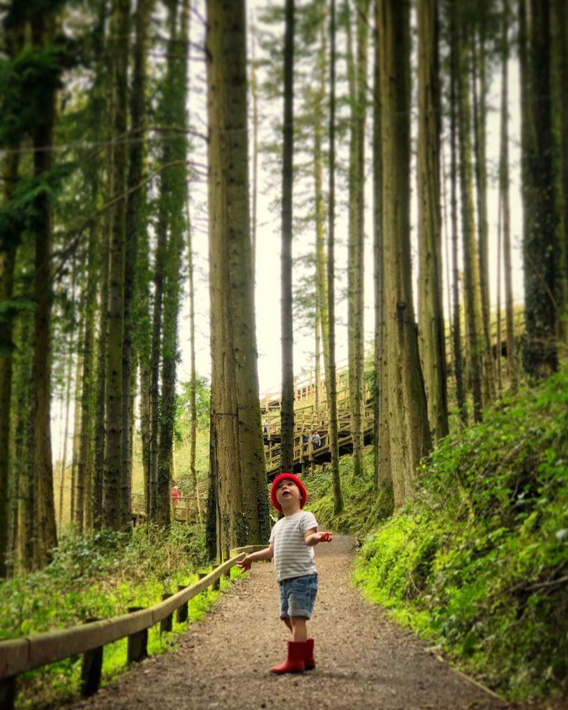 Family Fun Things to do at Bluestone - nature walk