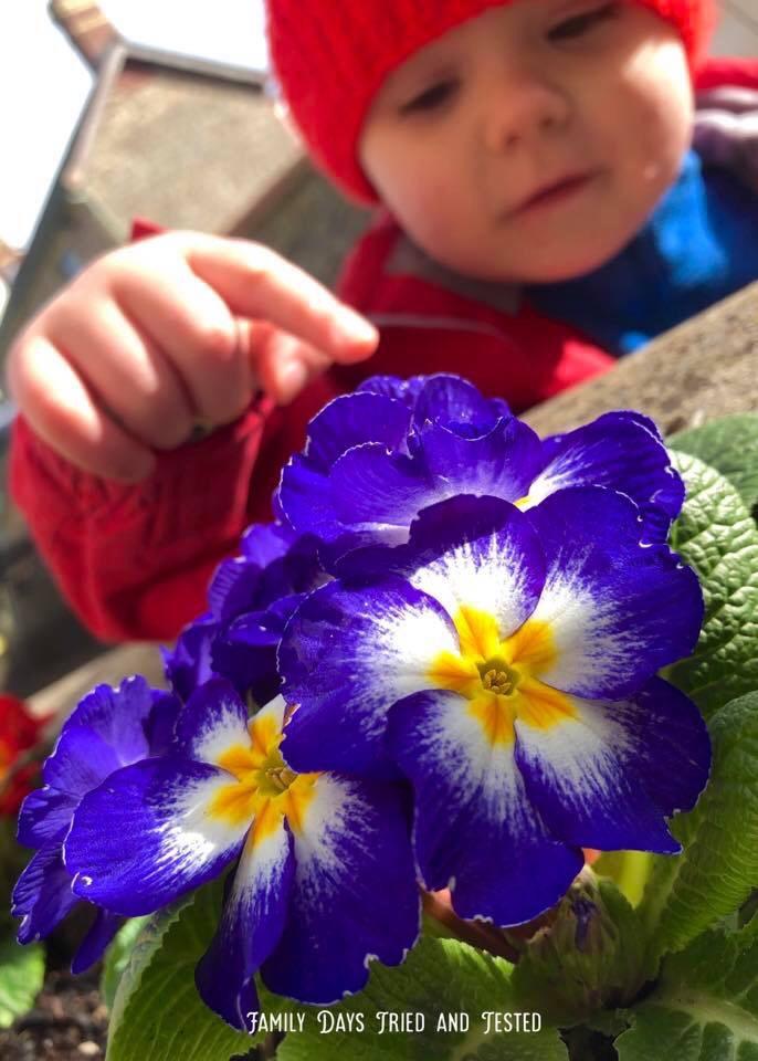Flower Colour Hunt