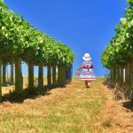 Strawberry Fields – Blue Skies at Over Farm